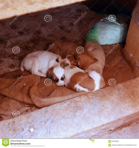 a litter of puppies litter of puppies stock photo image 64048853