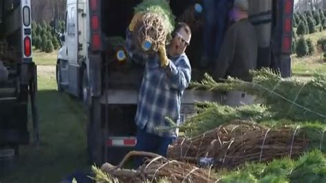 christmas tree growers in central ohio prepare for after