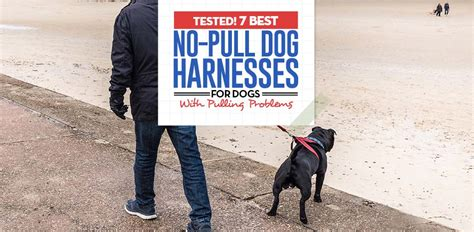best no pull harness top 7 best no pull harness for dogs that pull 2018 review