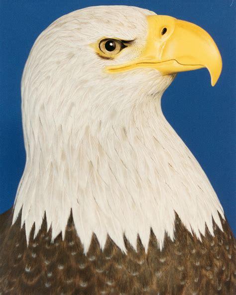 Eagle Head Image