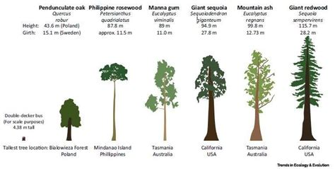tree species the unique challenges of conserving forest giants