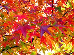 autumn colors fall colours as seen through the eyes of autumn the sutton