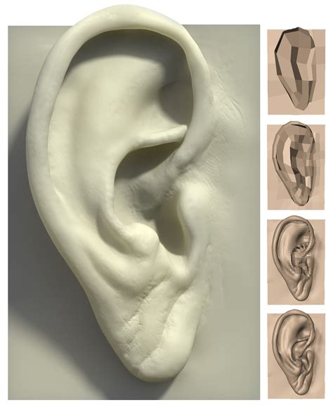 zbrush tutorial ear zbrush step by step and 3d on pinterest