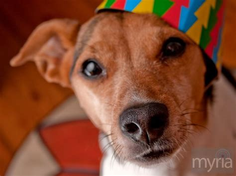 dogs name in up the top 10 most popular names for dogs cats myria