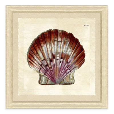 Shell Wall Decor by Buy Sea Shell Wall Decor From Bed Bath Beyond