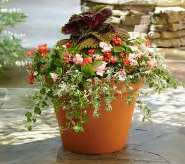 Design For Potted Plants For Shade Ideas Three Beautiful Container Garden Options