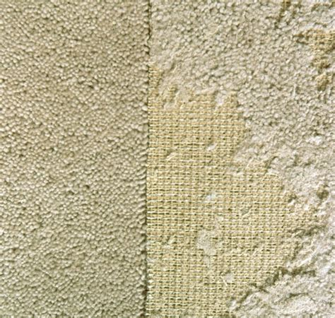 moths in rugs get rid of carpet moths information on carpet moth treatment pest supermarket
