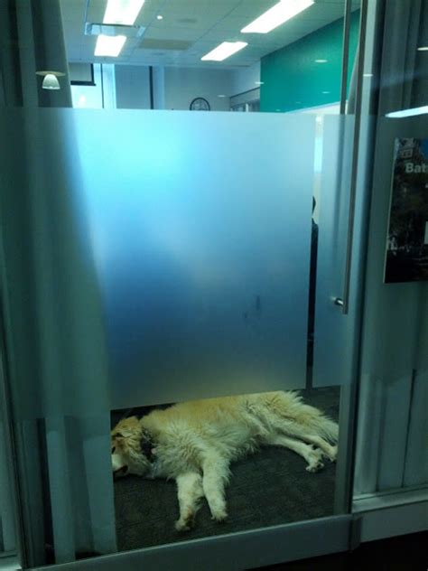 nap room nyc sleeping spotted in a conference room