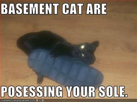 Basement Dweller Meme - basement cat meme memes