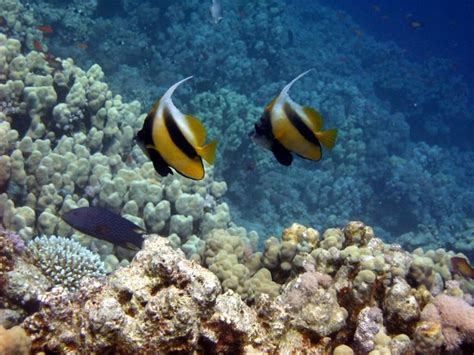 dive in sharm take a dive in sharm el sheikh days of travel