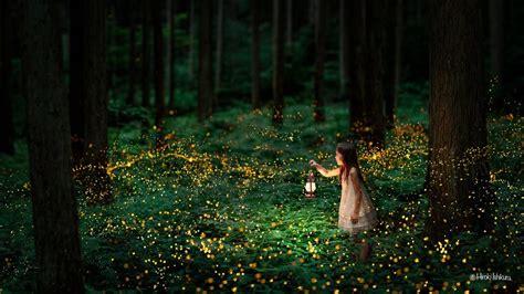 fireflies light   night  amazing