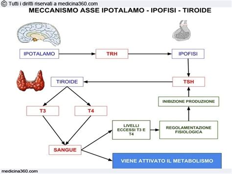 tsh reflex test quali sono le cause di alta tsh disturbi metabolismo