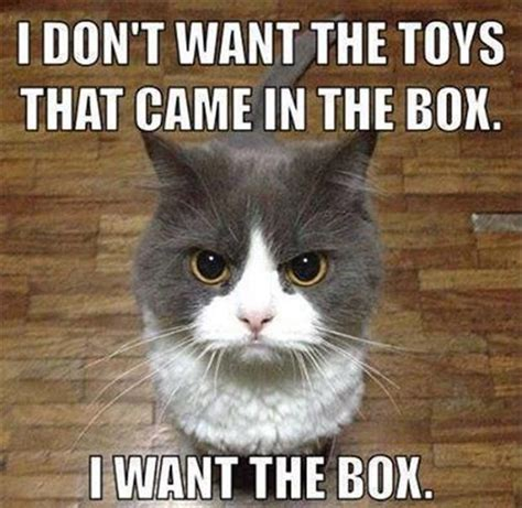 Funniest Cat Memes - 10 funny cat memes that will make you go rofl