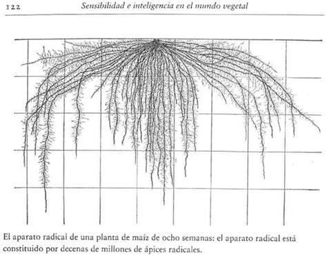 sensibilidad e inteligencia en 8416252319 sensibilidad e inteligencia en el mundo vegetal terra org ecolog 237 a pr 225 ctica