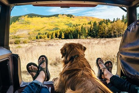 traveling with dogs things you should before travelling with your wishforpets
