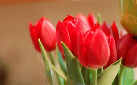 tulips flowers bokeh wallpaper 5120x3200 23648 beautiful spring flowers wallpaper 2560x1600 22596