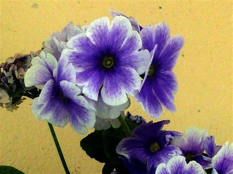 floreros y flores artificiales jarrones flores artificiales facilisimo