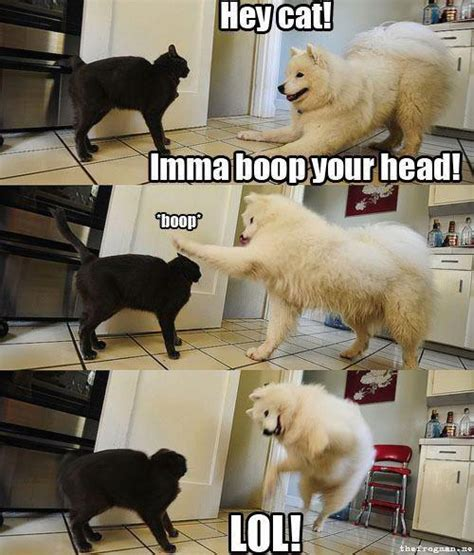 Dog And Cat Memes - animal animal animal april 2013