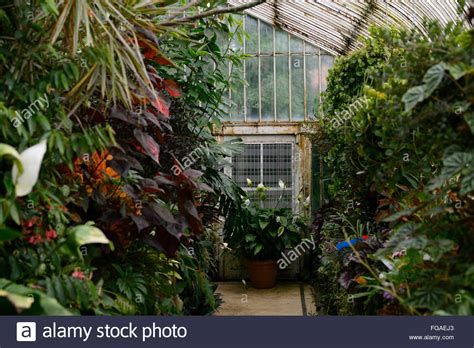 belfast botanical gardens palm house glass house tropical