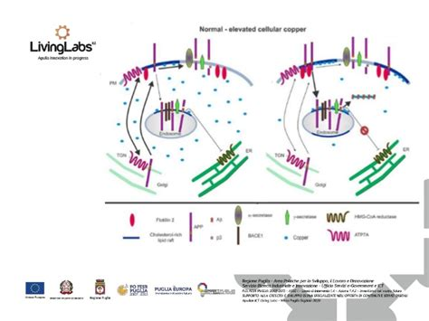 test alzheimer precoce test c4d per la diagnosi precoce dell alzheimer