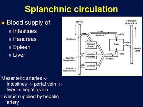 splanchnic bed circulation through special regions 3