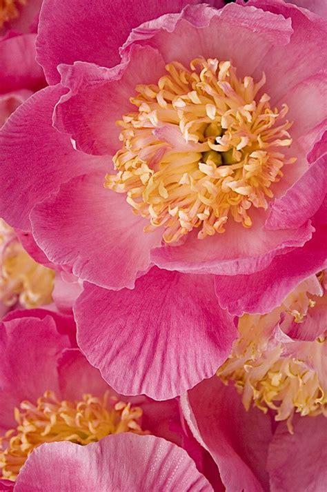 tatuaggi fiori tropicali oltre 25 straordinarie idee su fiori tropicali su