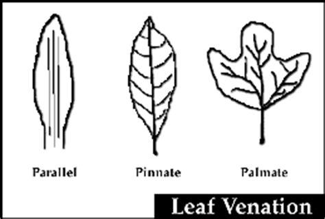 venation pattern analysis of leaf images pinnate venation conservapedia