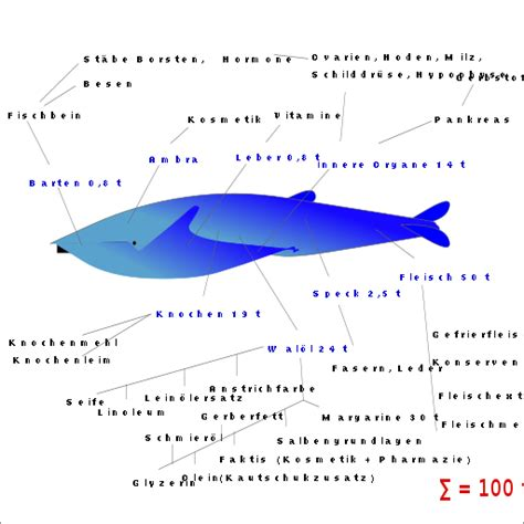 File Whale Products D Hg Png Wikimedia Commons - file whale products d hg svg