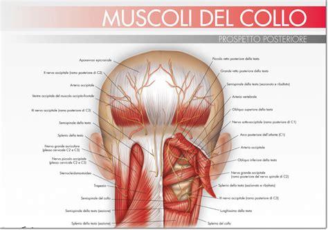dolore cervicale e mal di testa quando il mal di testa dipende dalla cervicale