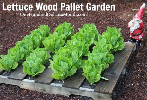 How To Lettuce From Your Garden wood pallet garden pictures lettuce strawberries celery