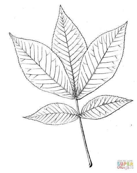 coloring page pot leaf leaf coloring maple page pages grig3 org
