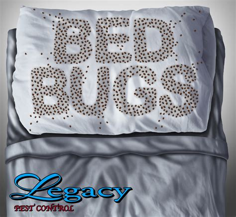 best way to get rid of bed bugs forever bed bug on
