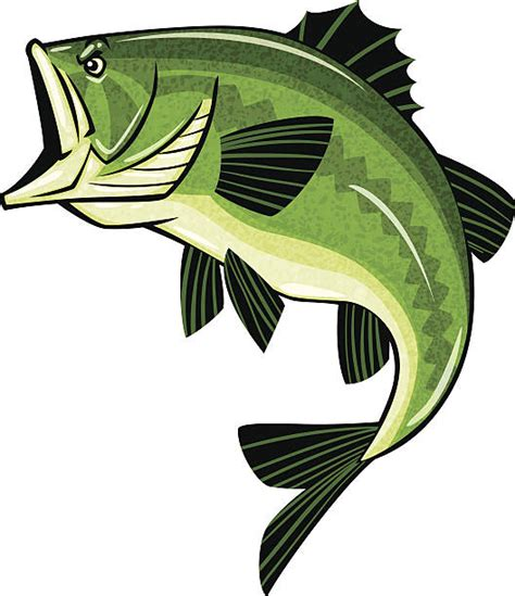 bass clip royalty free largemouth bass clip vector images