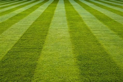 how to aerate overseed your lawn in portland oregon in 5 steps