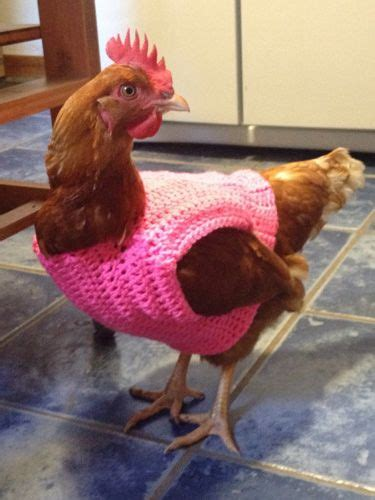 pattern for jumper for chicken sweaters chicken and photos of on pinterest