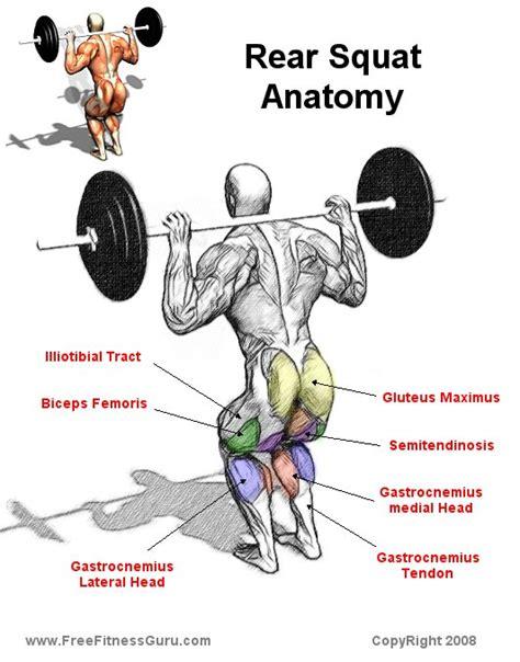 Bench Glute Raises Freefitnessguru Rear Squat Anatomy