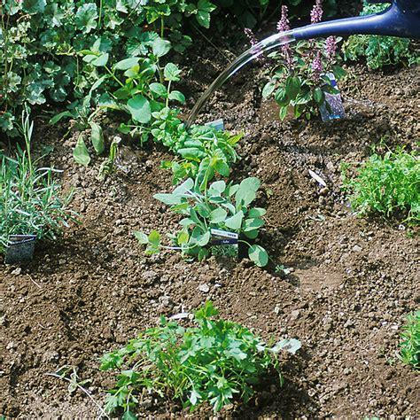 pflanzen shop kr 228 uter pflanzen shop kr uter als jungpflanzen erwerben