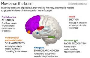 Parts of the brain and what they do parts of a viewer s brain