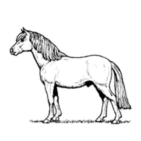 miniature horse coloring page miniature horse 187 coloring pages 187 surfnetkids