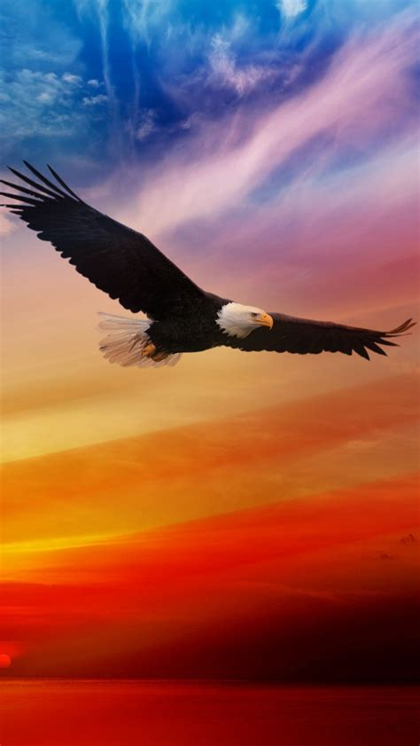 wallpaper iphone 6 eagle american bald eagle for independence day iphone 6 6 plus