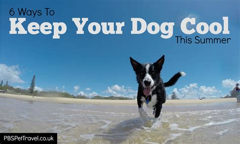 How Do I Keep Dogs The by 3dogart 6 Ways To Keep Your Cool This Summer