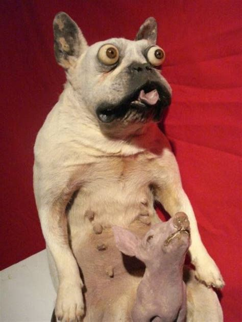 Sergeant Stubby Taxidermy Best 20 Bad Taxidermy Ideas On