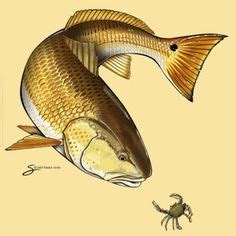 redfish tattoo redfish tattoos www pixshark images galleries with