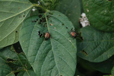 types of garden pests nine tips for eco friendly garden pest