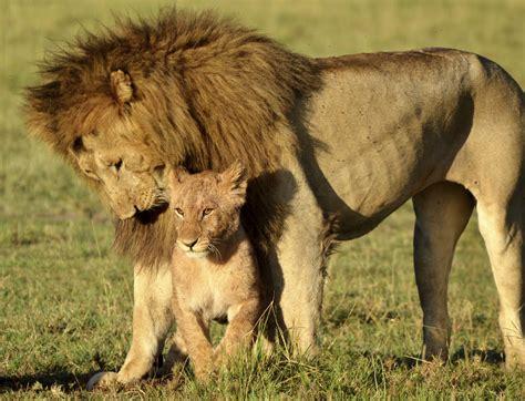 Safitri Syari cing safari tansania cing reise mit badeurlaub