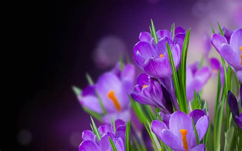 Photographic Florals by Purple Flower Hd Wallpapers
