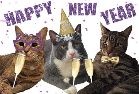 happy new year cat 2015 www pixshark images