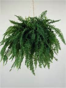 Low Light Hanging Plants Indoors by Best Indoor Plants For Your Home Best Houseplants For