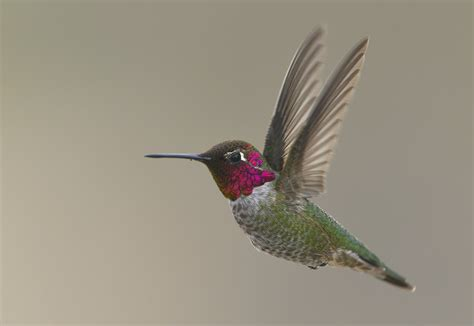 best 28 how much is a hummingbird worth 20 reasons to