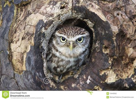 owl tree owl in tree clipart clipart suggest